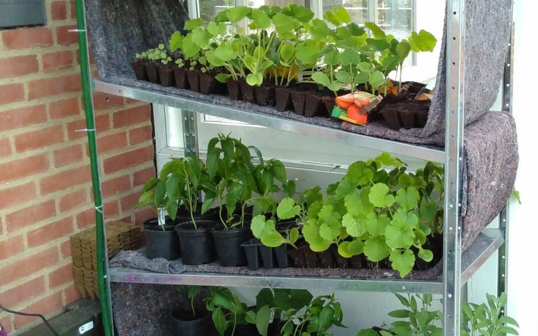 Lav din reol om til et selvvandende gartneri